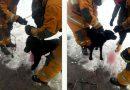 В Пинске пёс угодил в капкан: на помощь пришли спасатели