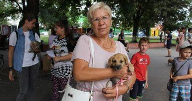 Пинские защитники животных ищут волонтёров