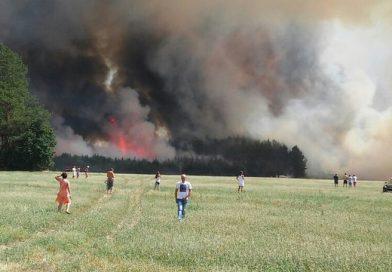 На всей территории Брестской области введен запрет на посещение лесов
