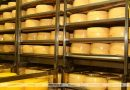 Молочка обеспечивает 40% экспорта с/х продукции