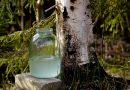За берёзовым соком в Пинский лесхоз