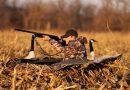 С 18 сентября открывается охота на гусей